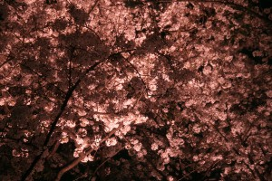 cherrytree-night-018